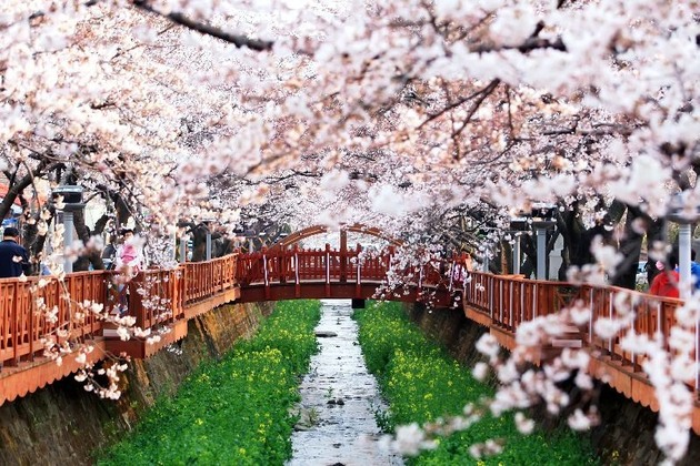 Korea weather in spring