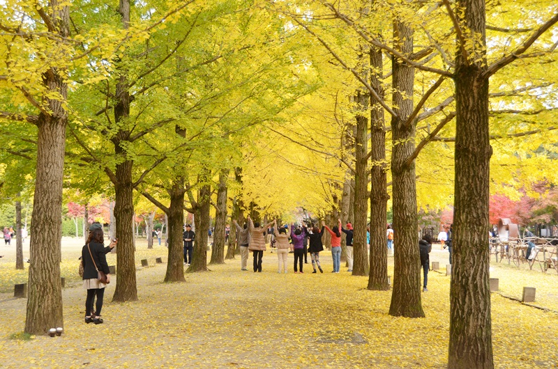 Nami Island in Seoul shore excursions