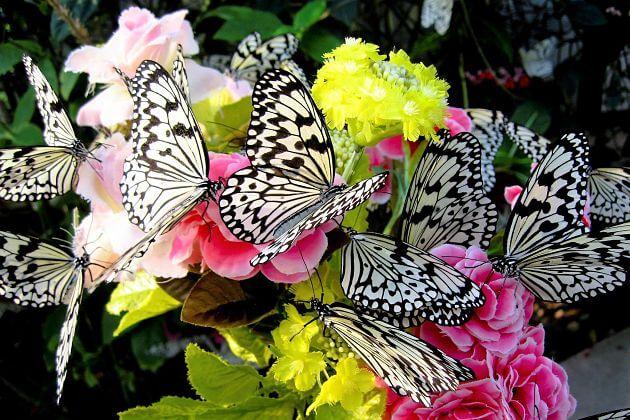 Ryugujo Butterfly Gardens