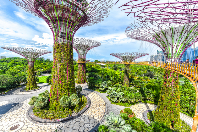 Gardens by the Bay - Singapore day tours