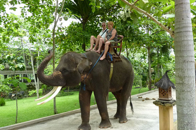Elephant Ride in Bali shore excursions