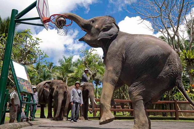 Elephant Safari Park - Indonesia shore excursions