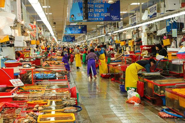Jagalchi-Market-Busan-shore-excursions