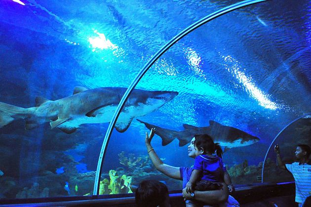 Langkawi shore excursions - Underwater World