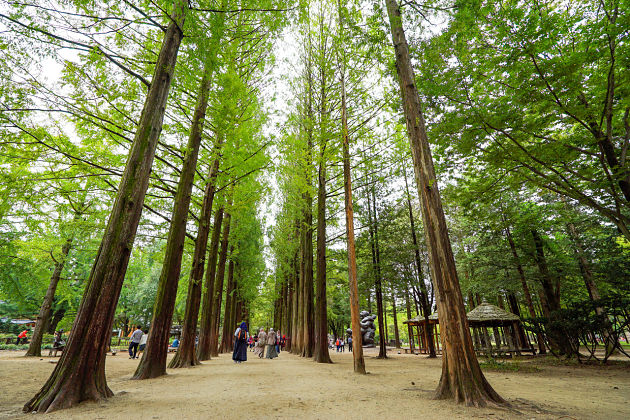Nami Island - Incheon shore excursions