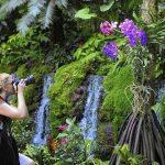 Singapore Botanic Gardens