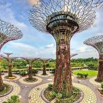 Singapores-Gardens-by-the-Bay-with-Lunch