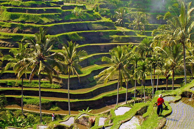 Bali Nature Exploring Tour
