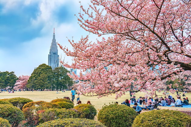 Places to See Cherry Blossoms – Sakura Hanami Spots in Japan