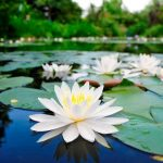Monet-Garden-Marmottan-Kochi-shore-excursions-Japan
