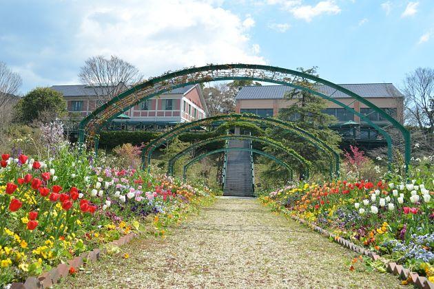 Monet flower Garden Marmottan - Kochi Japan shore excursions