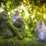 Alas-Kedaton-Monkey-Forest-in-Bali