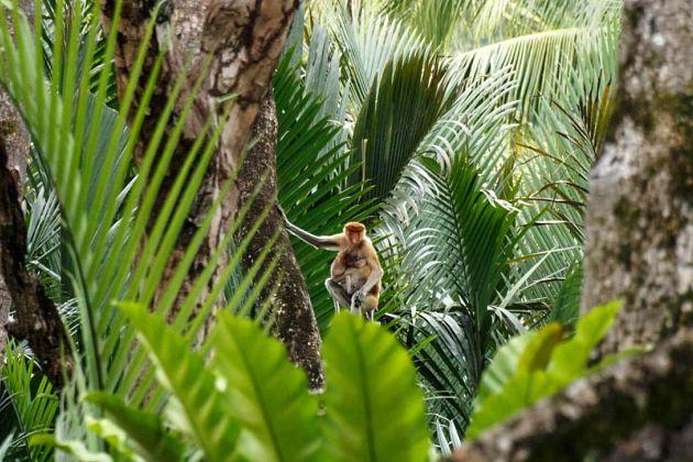 Mangrove Safari Brunei shore excursions