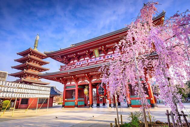 Tokyo Highlights Tour