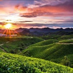 Malino Highlands in Makassar shore excursions