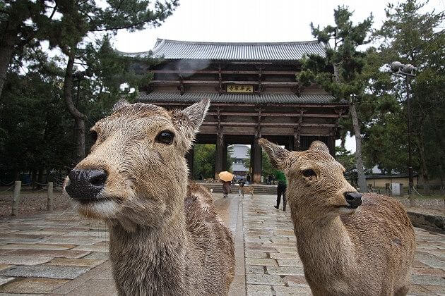Nara Deer Park in Todaiji Temple