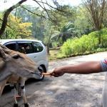 Safari Bogor Park - Jakarta shore excursions