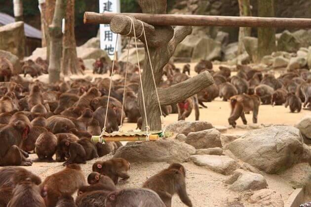 Takasaki-Monkey-Park-Beppu-shore-excursions