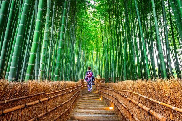 Arashiyama-Bamboo-Grove-Kyoto-shore-excursions