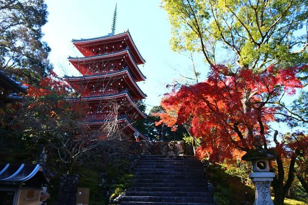Chikurin-ji-Temple-kochi-shore-excursions-japan