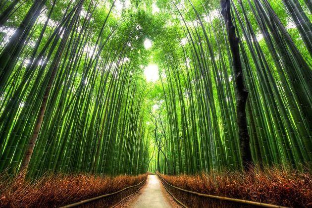Arashiyama Bamboo Kyoto shore excursions