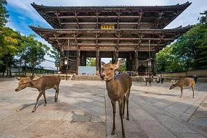 Kobe Nara Westerdam Cruise Oct 2019