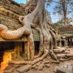 Ta Prohm Siem Reap shore excursions