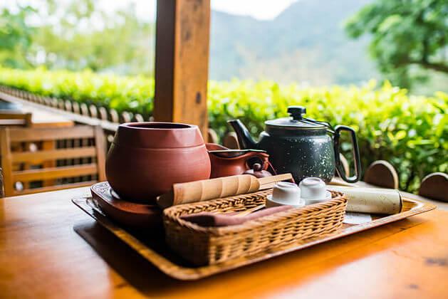 Taipei Tea Plantation Experience