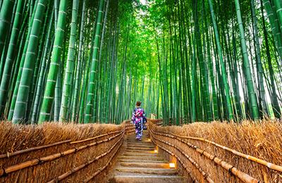 Arashiyama Area - Bamboo Forest